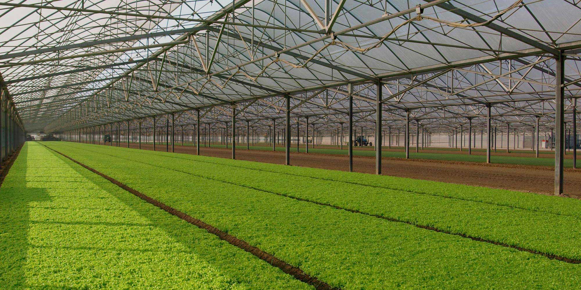 Chaudi re biomasse combustibles uniconfort srl for Serra agricola usata